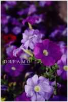Purple by D-R-E-A-M-O