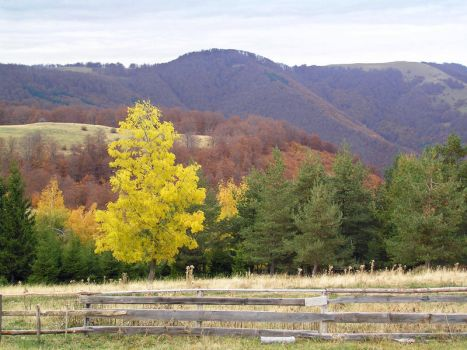 Autumn colours by Ovcaa