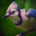 Handsome by clippercarrillo