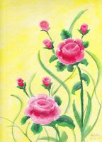 Pink Roses by valilia