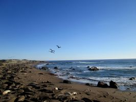 Where Pelicans fly and Elephants lie by DVanDyk
