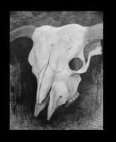 Cow Skull by BalloonTomb