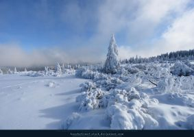 White Forest 03 by kuschelirmel-stock