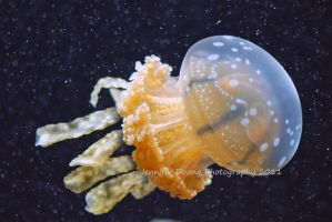 Common Lagoon Jelly 1 by MorrighanGW