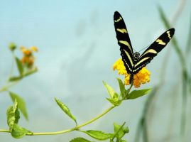 yellow and black by LucieG-Stock