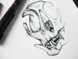 .cat skull. by bjesomarka