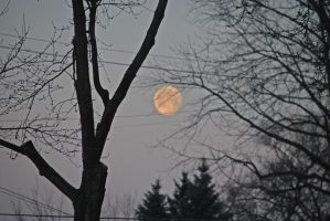 Winter Moon_0017_2-9-12 by eyepilot13