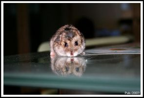 Q the hamster by neodium