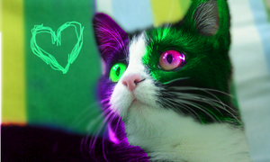 Cute Green and Pink Cat by xXxGoldenFlowerxXx