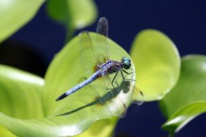 Dragonfly 2 by CASPER1830