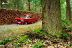 Polish Bandit 125p in Forrest by GregKmk