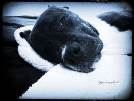 Odin is a tired puppy by Hayes-Designs