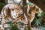 Mama Leopard by 904PhotoPhactory