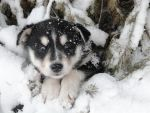 Winter Fun With Puppies by Sabrawing