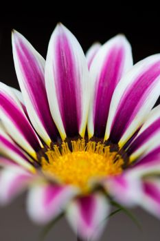 Pink Flower I by adambrowning