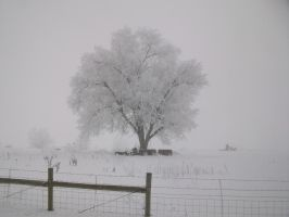 Winter Scenes - Fog Frosted Tree by Qrinta