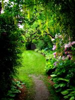 Garden Path by thedustyphoenix