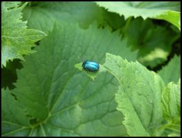 Blue insect on green bed by cyric80