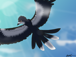 William the magpie by XxPuppyProductionsxX