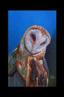 owl painting by tat2istcecil
