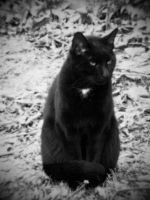 The farm cat 12.25.10 by GingerBedlam