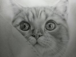 Gazz\'s cat drawing by terrycernuda