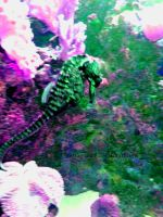 psychedelic seahorse by imFragrance