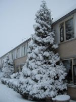 The snow tree X3 by MrX3000