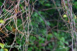 A Spider NET by HawaDary