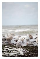 The Seagull-Session II. by satiricalme