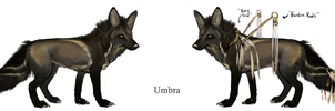 Umbra rough by Feathered-Manx
