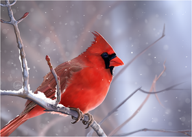 The Red Cardinal by PaleMount