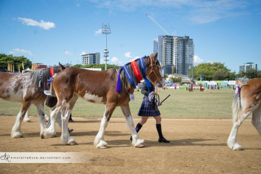 RQS Clydesdale #115 by AmoretteRose