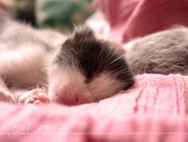 Sweet Little Kittens 03 by ariellemika12