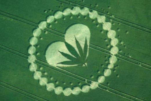 Heart and Cannabis leaf Crop Circle by returnofthefetus