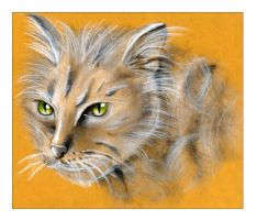 yellow cat by tbianchini