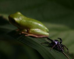 Spider and tree frog by Cristian-M