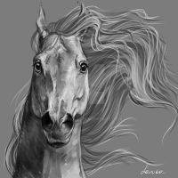 horse portrait 8 by Lenika86