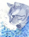 Blue Cat by Cindy-R