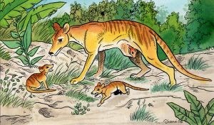 Thylacine mom by DianaKennedy