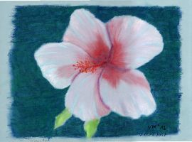 Hibiscus by volker03