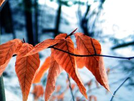 Leaves in Winter by wagn18