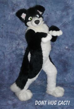 Chase Border Collie fullsuit by Blonde-Foxy