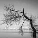 a leafless tree by PansaSunavee