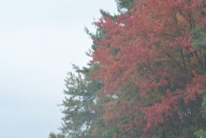 2014 Natural Autumn Color 12 by Miss-Tbones