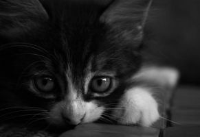 my little cat by buguanle