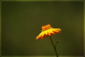 Flower in the Gardens by Jer-Trow