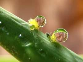 Double Bubble Trouble Close Up by Piombo