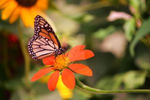 Butterfly on flower 1 by ArtieWallace