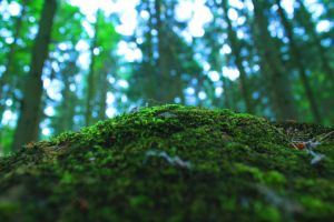 Moss by GreatCohesion